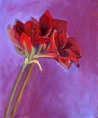 Red Amarilys - 54x65 cm